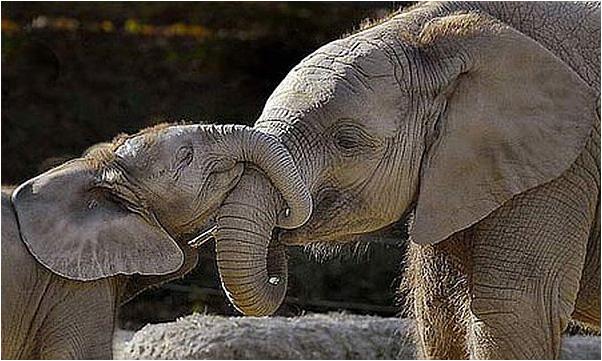 elefante-mama-y-bebe