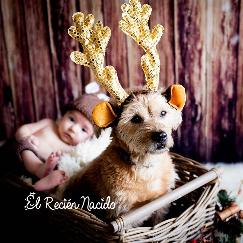sesiones de fotos de navidad con niños y perros